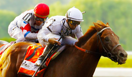 Horses 265x155 0.jpg.pagespeed.ce . toTKt4b86 Do you watch the Kentucky Derby?