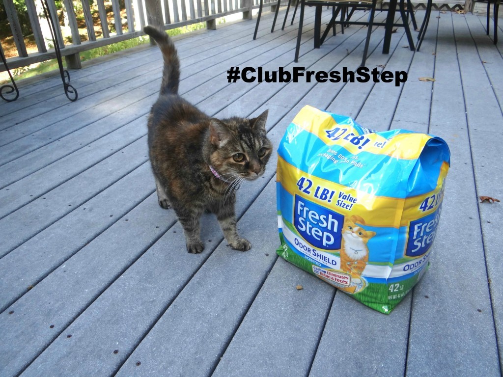 DSC04631 1024x7681 Fresh Step Odor Shield Cat Litter to the Rescue! #ClubFreshStep #cbias #shop