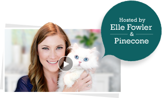 welcome elle fowler tout no video Gift Ideas and Shopping Tips for Cat and Cat Owners!