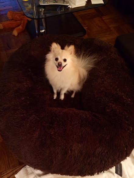 unnamed 41 Baylee Nasco Pet Bed Review and Giveaway! #BayleeNasco