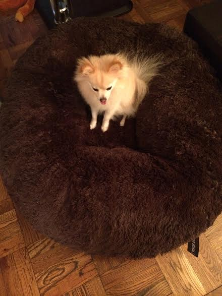 unnamed 6 Baylee Nasco Pet Bed Review and Giveaway! #BayleeNasco