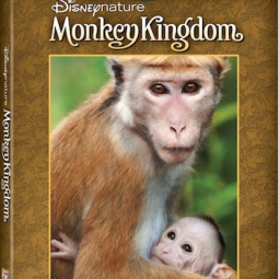 Monkey Kingdom Out on DVD TODAY!!