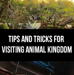 Tips and Tricks for Visiting Animal Kingdom